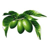 Buy cheap Anti-Oxidant Olive Leaf Extract Model: 1023 product
