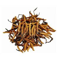 Anti-Oxidant Cordyceps Sinensis Extract Model: 1025
