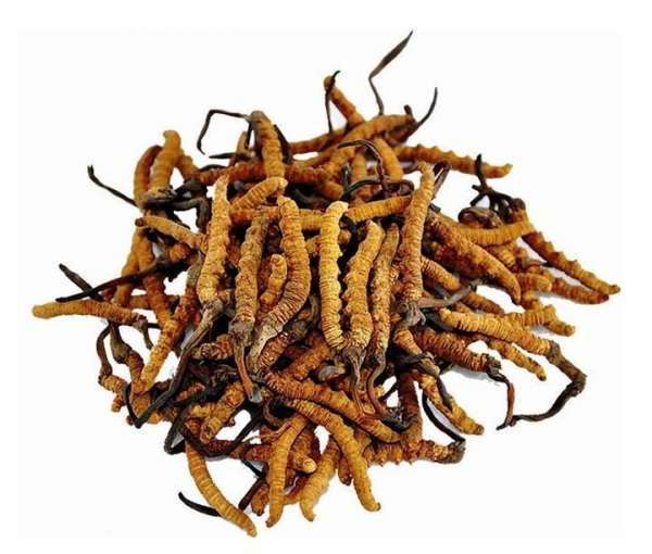 Quality Anti-Oxidant Cordyceps Sinensis Extract Model: 1025 for sale