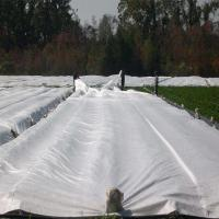 Buy cheap Pp spunbond nonwoven fabric Horticulture Vegetable Garden Weed Barrier Fabric Anti UV product