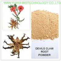Hot sale Devil's Claw /Harpagophytum procumbens Extract/Devil's Claw annua L.