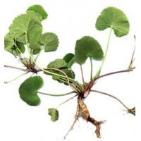 Buy cheap Standard Extracts Gotu Kola Extract product