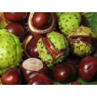 Buy cheap Standard Extracts Horse Chestnut Extract product