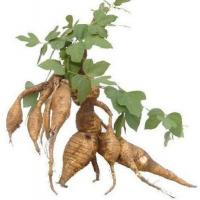 Buy cheap Standard Extracts Kudzu Root Extract product