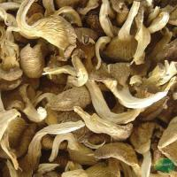 Buy cheap Dried Oyster Mushroom from wholesalers