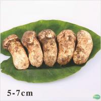 Buy cheap Fresh Mushroom Name: Fresh Matsutake 5-7cm from wholesalers