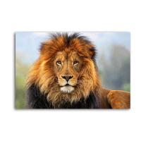 Buy cheap Lion Canvas Prints,Wildlife Animal Paintings product