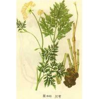 herb extract and herb monomer